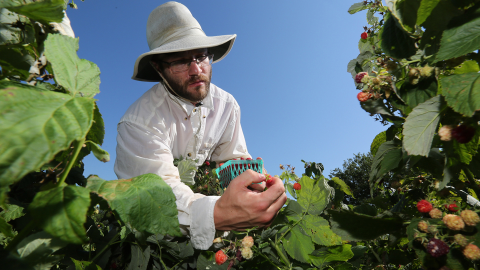 Sustainable agriculture participant harvesting on the JCCC Open Petal farm